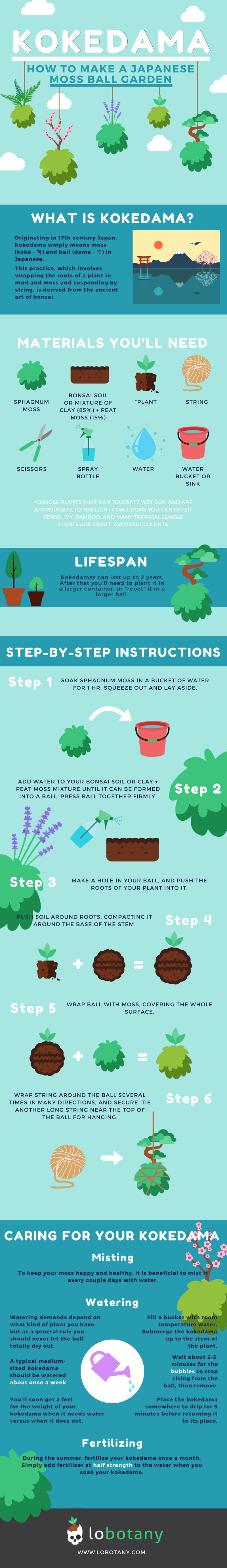 DIY kokedama infographic how to make Japanese moss ball garden