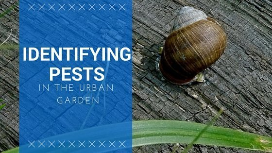 Identifying Urban Garden Pests