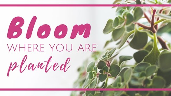 Bloom Where You Are Planted Guest Post Header