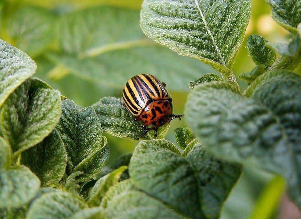 How to choose best nursery plants urban gardening