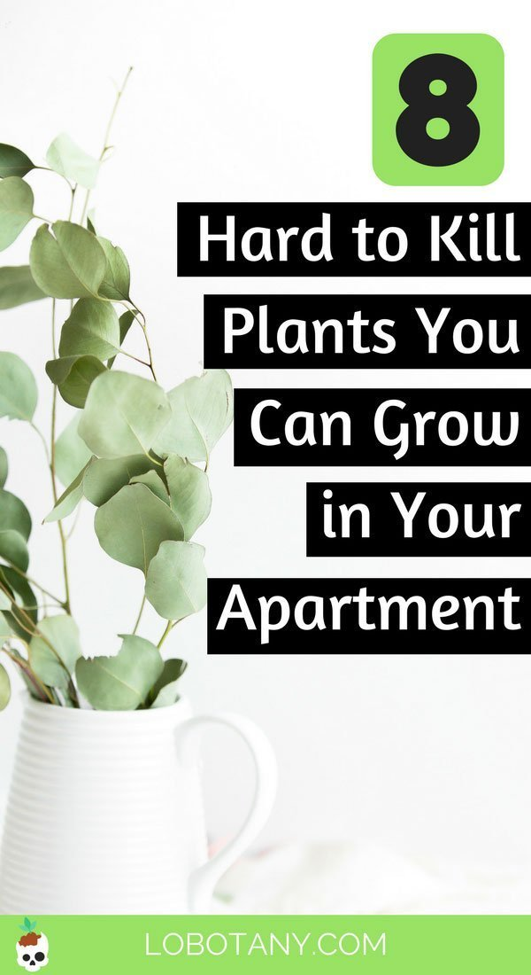 8 Hard To Kill Plants You Can Grow In Your Apartment