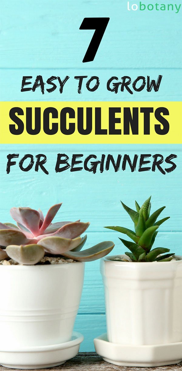 Easy To Grow Succulents For Beginners