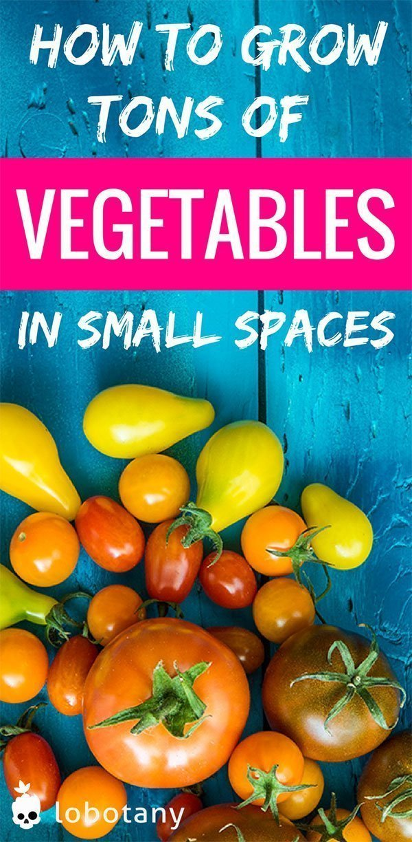How to grow veggies in small spaces