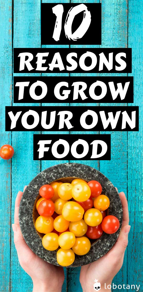 10 reasons to grow your own food