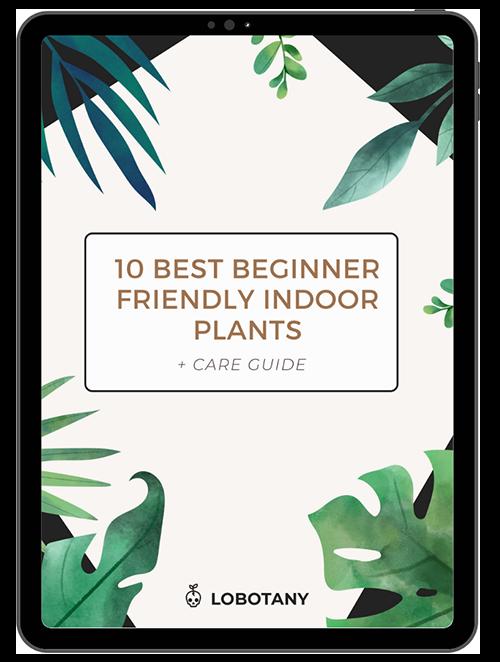 10 Best Beginner Friendly Indoor Plants + Care Guide